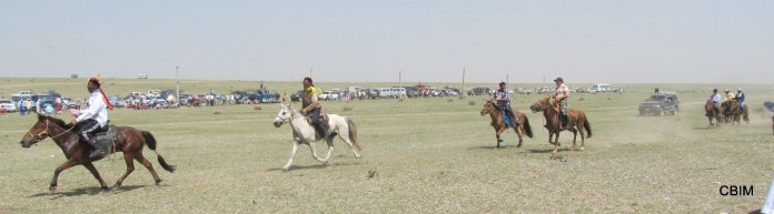 Horse Hero Slider